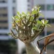 Le ginseng un remède naturel multifonction